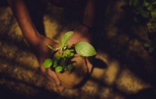 Foto de unas manos sosteniendo un plantin sobre la tierra, como para plantarlo.