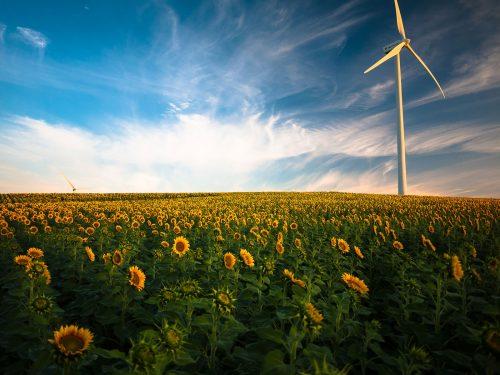 Foto de un campo de girasoles y un cielo azúl con nubes, donde se impone un estilizado generador de energía eólica