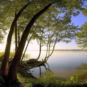 Foto de un atardecer entre los árboles a la orilla de un lago