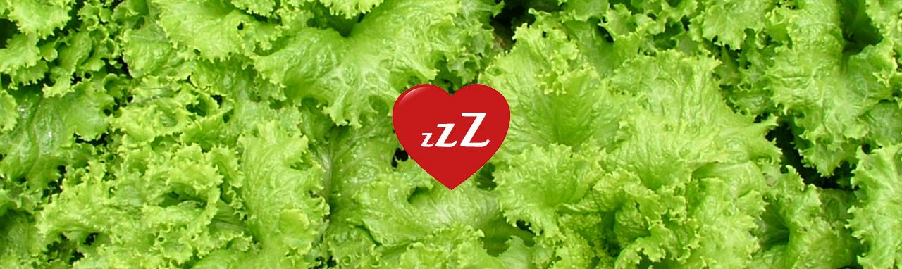 6 remedios naturales contra el insomnio - Te de lechuga