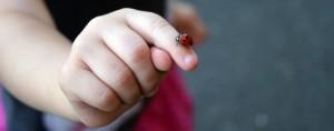 Disfrutando de las cosas simples de la vida: Vaquita de san antonio