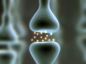 Gráfico de dos neuronas y la sinápsis entre ellas