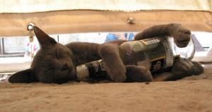 gato-borracho